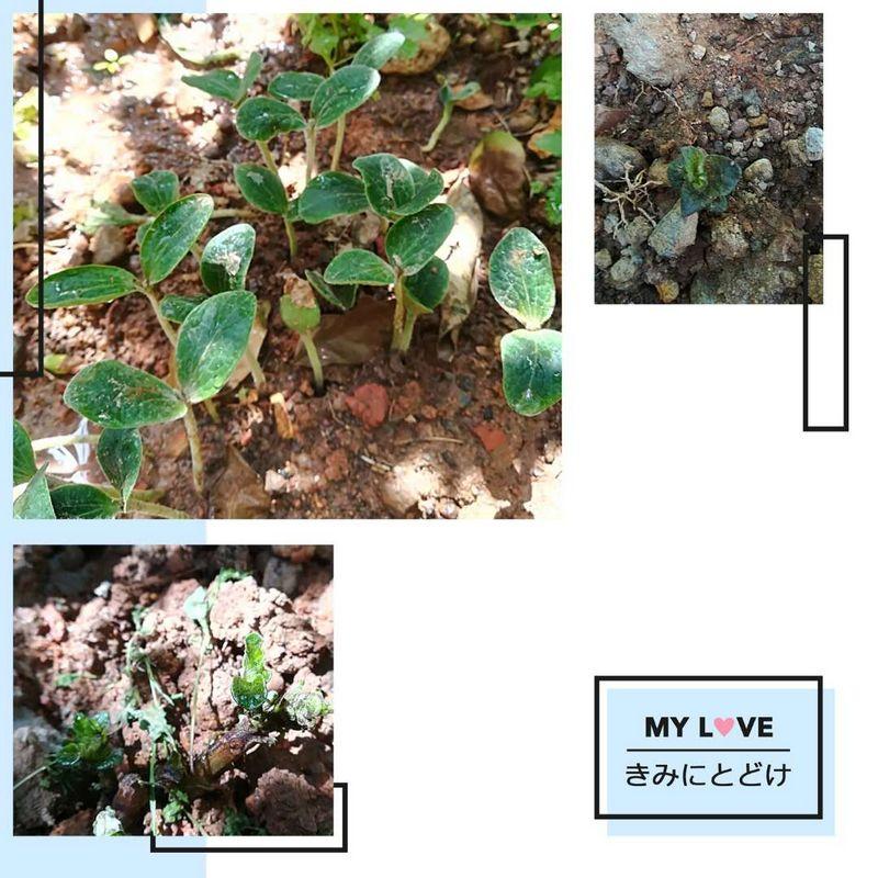幼儿园小班画柳树发芽作品图片